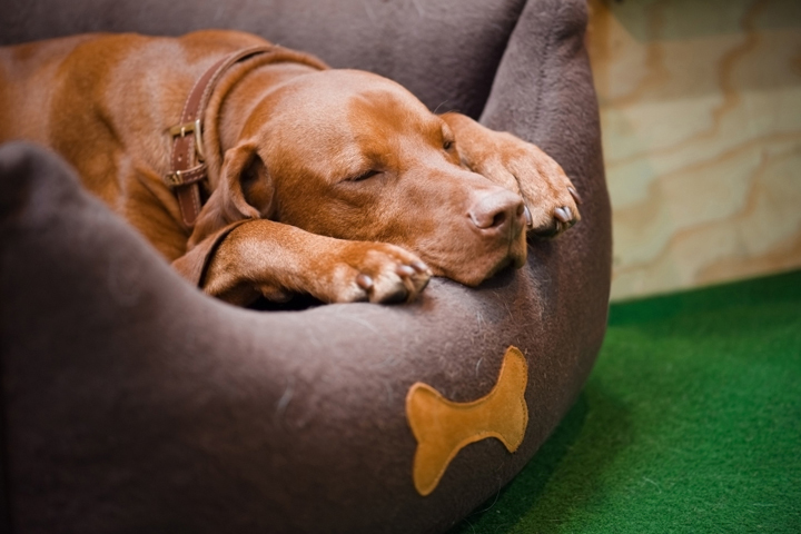 dog is sleeping in the sofa