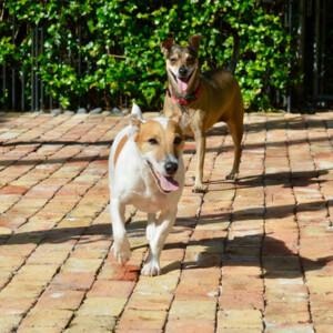 benefit of hiring a dog walker